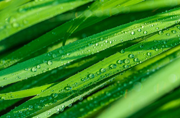 A beautiful green leaf background with water drop.