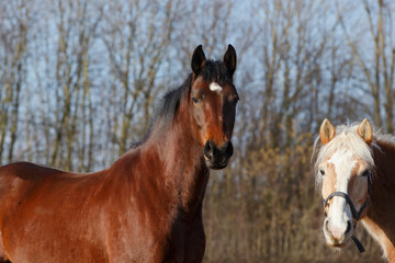 Pferdeblicke