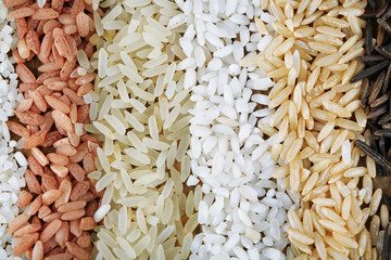 Different types of rice close up