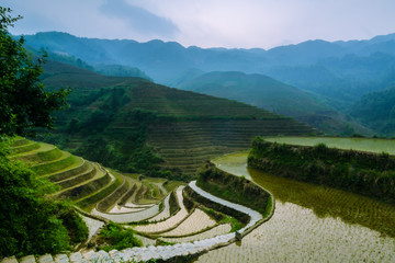 Garden Poster Rice fields terraced rice field in asia