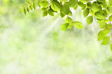 Frühling 324