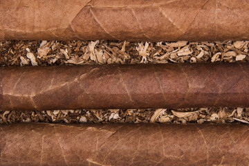 Cuban cigars on tobacco background