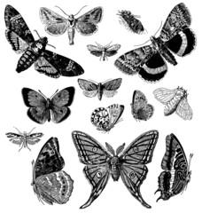Papiers peints Papillons dans Grunge Butterflies