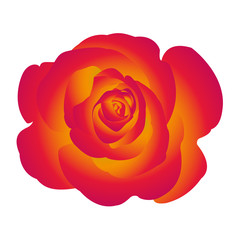 Single flower of yellow red rose. Vector.