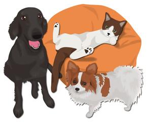 大型犬と小型犬と猫のくつろぎ