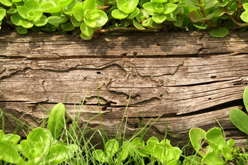 Wall Mural - Summer background with old wooden plank