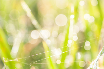 bokeh blurry natural abstract green background