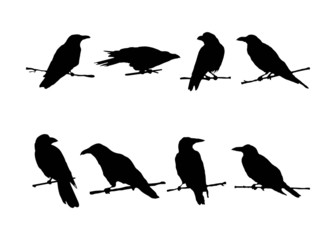 Set of ravens