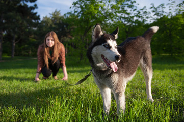 The girl is having fun with her husky dog in the park