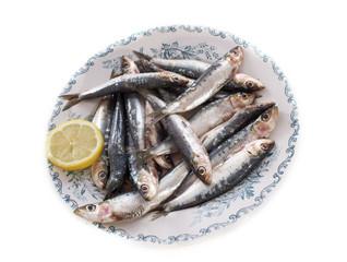 fresh sardine