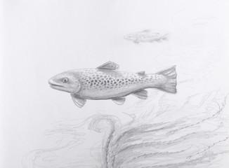 Fish Pencil Drawing