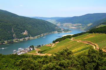Rhine valley in Rudesheim Fototapete