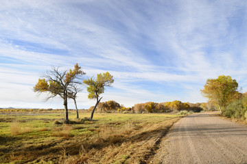 Fototapete - Fall Colors along Gravel Road in New Mexico