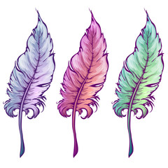 Vector illustration of feather in three colors