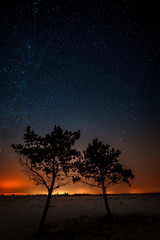 Two trees are growing together on the background of the starry s