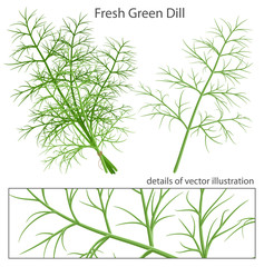Fresh and green dill.