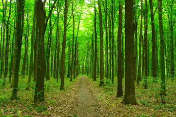 Wall Murals Road in forest green forest