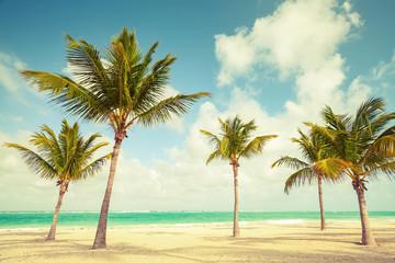Palm trees grow on empty beach. Coast of Atlantic ocean