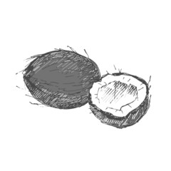 Coconut. Sketch on white background.