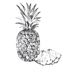 Pineapple. Sketch on white background.