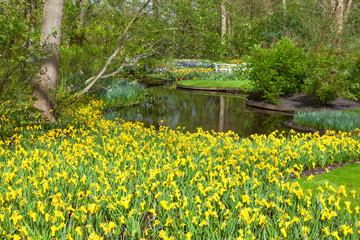 Fototapete - Spring Flowers in Keukenhof Garden, Lisse, Netherlands.