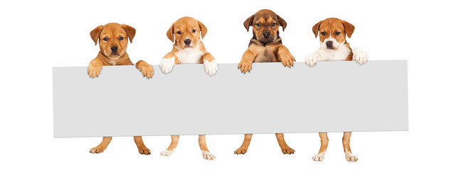 Wall Mural - Puppies Hanging Over Banner