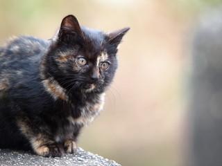 サビ猫の子供