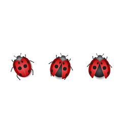 Group ladybug