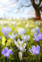 Wall Mural - abstract sunny beautiful Spring background