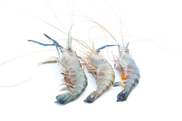 Fresh water crayfish on isolated background
