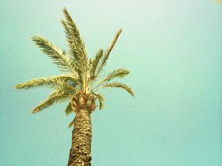 Palm tree against the sky, retro image