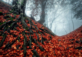 Recess Fitting Magenta Mysterious autumn forest in fog