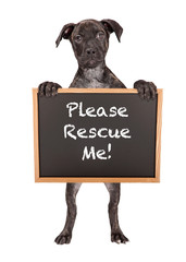 Fototapete - Cute Puppy Holding Rescue Me Sign
