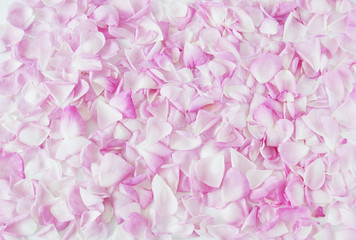 Pink rose petals background