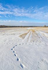 Fototapete - Fox trace. Winter scene in Central Russia.