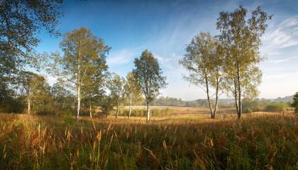 Панорама осень сентябрь березовая роща пейзаж утро туман