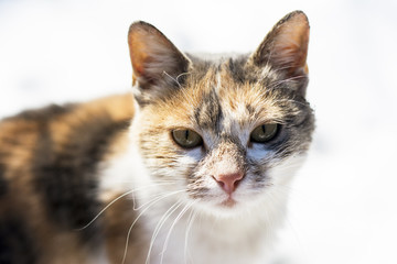 Cat looking straight to camera