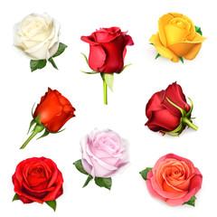 Roses, vector set