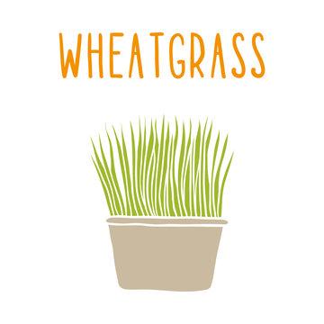 Wheatgrass.