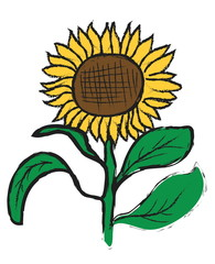 doodle sun flower on white background
