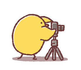 カメラマンヒヨコ