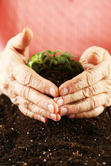 Hands of old woman and young plant, closeup view