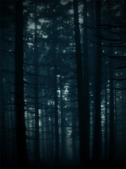 Vectorized background image of a dark mysterious forest