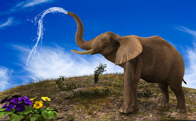 Elephant watering flowers