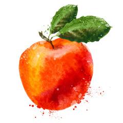 fruit vector logo design template. Peach or Apple icon.
