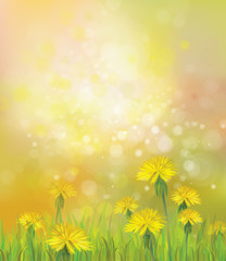 Vector of spring background with yellow dandelions.