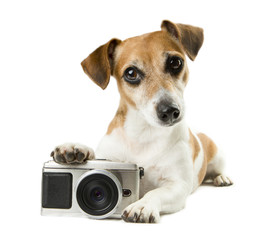 Cool dog lying near the photo camera staring