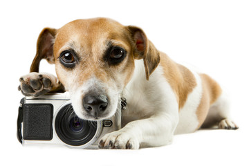 dog lying near the camera staring tired upset