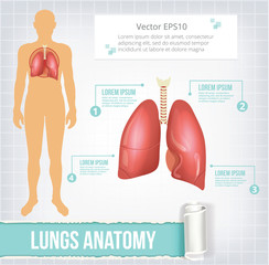 Vector lungs infographics banner illustration