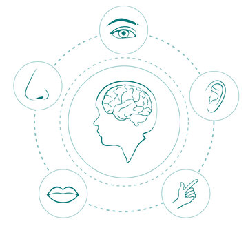 vector five senses icons, human nose, ear, eye